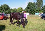 Privatverkauf - Auf dem Pferdemarkt soll sie einen Besitzer finden der viel Zeit hat. (C) Tanja Mundt-Kempen
