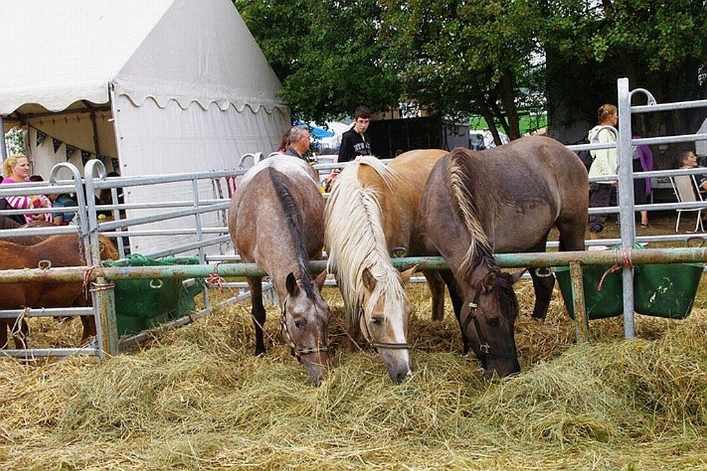 Tiere und Menschen werden während der Markttage gut versorgt