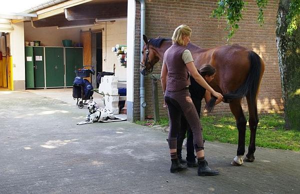 Vorbildlich: wenn Kleinkram, Sattelwagen und Hunde einen festen Platz haben, kann man Pferde sicher pflegen. Das setzt voraus, dass Sattelzeug und Pflegeutensilien ebenso wie Hindernisse und Mistgabel sachgerecht deponiert werden können