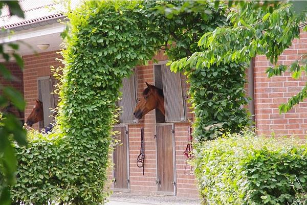 Schöne Aussicht ohne Ecken und Kanten genießen die Pferde bei der fahrsportbegeisterten Familie Schettler in Haltern