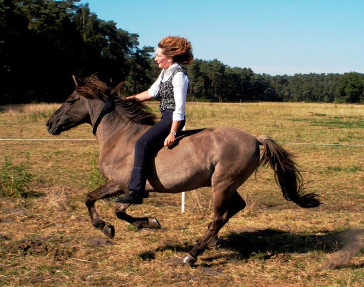 Weniger als eine Zäumung: der Halsring. Selbst wo Vertrauen und Einzäunung perfekt sind bleibt ein Risiko. Solcher Übung gehen oft jahrelange Gemeinsamkeit voraus. Das abgebildete Dülmener Wildpferd ist seit mehr als 20 Jahren bei seiner Reiterin und bei aller Freude ist nur eines sicher: kein Pferd ist immer und ausnahmslos berechenbar. (Foto: Raimund Hesse)