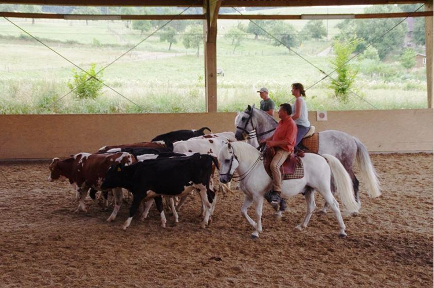 Rinderarbeit ist Teamarbeit