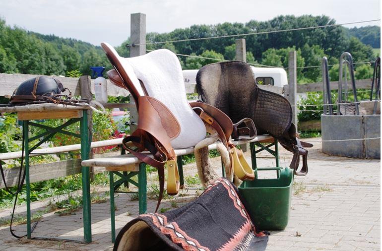 Bei der Working Equitation sind alle Rassen, Reitweisen und Ausrüstungen willkommen