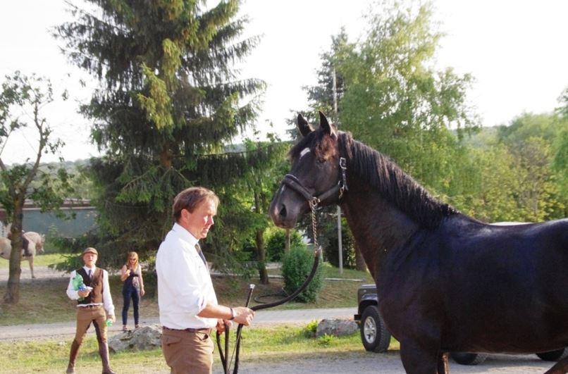 Still stehen sollte jedes Pferd können, auch in ungewohnter Umgebung