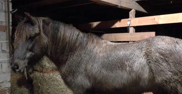 nasses-pferd01