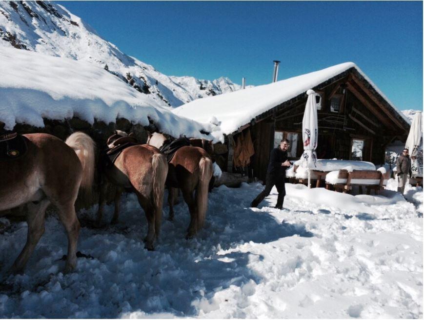 per-haflinger-auf-die-schneebedeckten-alpen