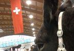 pferd-bodensee-05