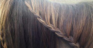 rapunzel-lass-dein-haar-herab