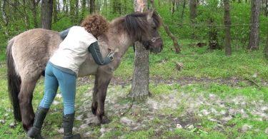 pferdel-legen-ihren-pelzmantel-ab-04