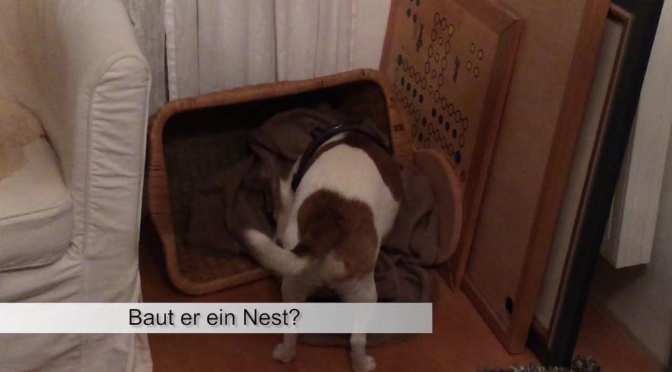 pferdeseite-tv-kleiner-hund-im-grossen-einsatz02