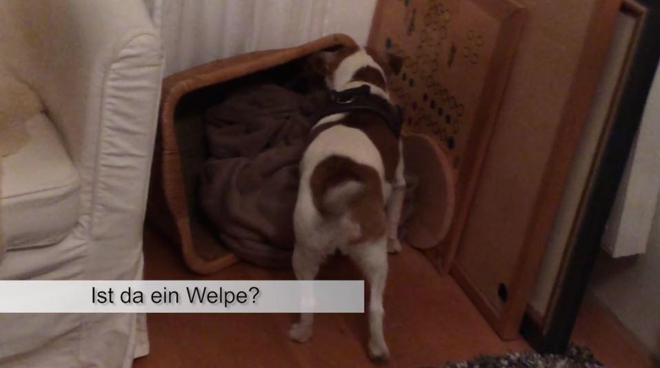 pferdeseite-tv-kleiner-hund-im-grossen-einsatz03