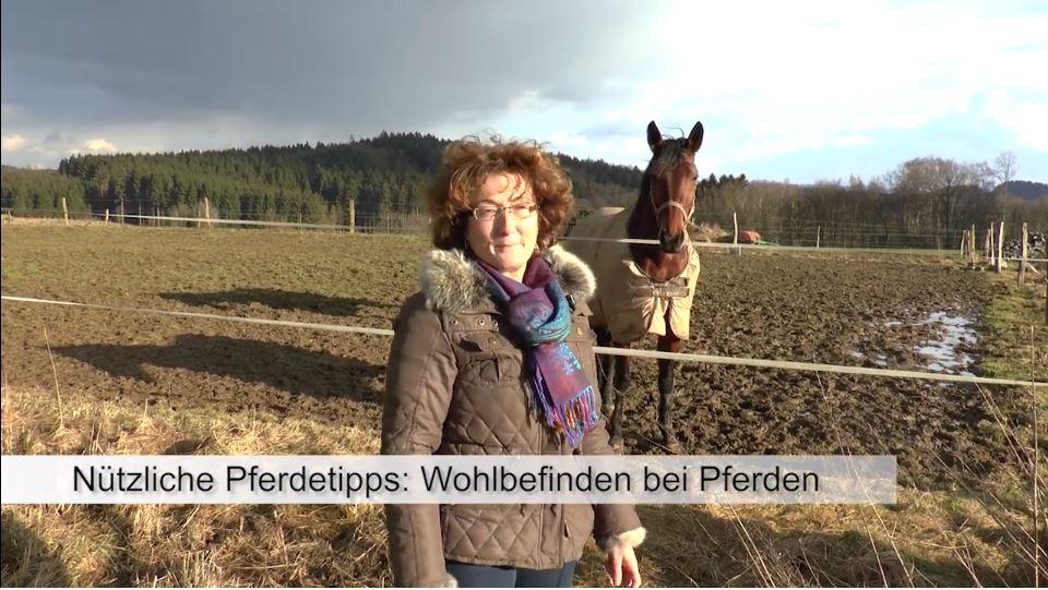 pferdeseite-tv-pferde-sind-keine-hoehlentiere01