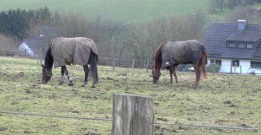 pferdeseite-tv-pferde-sind-keine-hoehlentiere02
