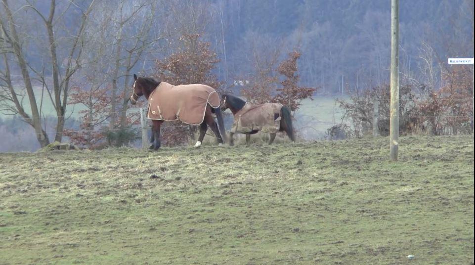 pferdeseite-tv-pferde-sind-keine-hoehlentiere03
