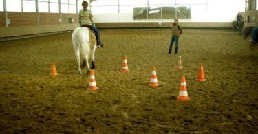 pferdeseite-tv-pferd-spring-in-reithallenspiegel