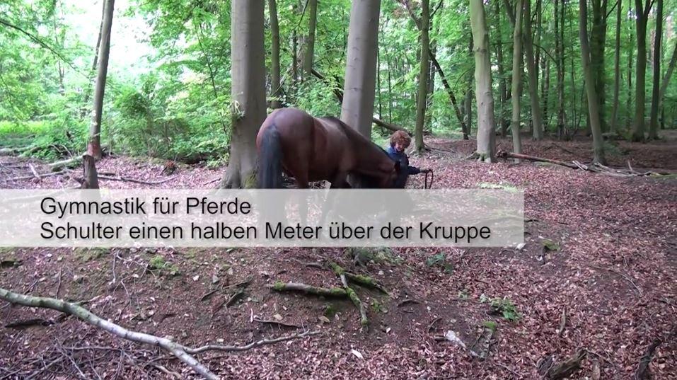 pferdeseite_tv_gymnastik_fuer_pferde_01
