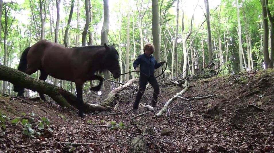 pferdeseite_tv_in_der_ruhe_liegt_die_kraft_am_berg