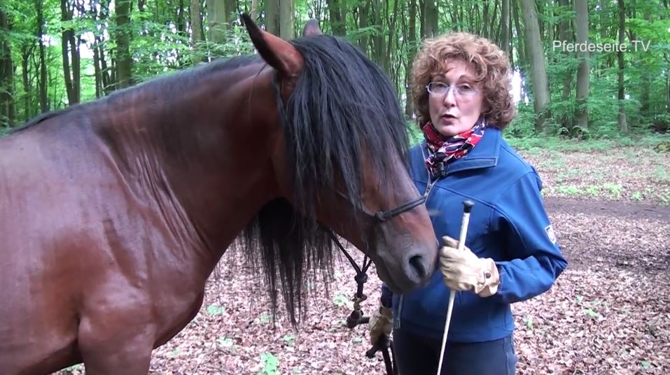 pferdeseite_tv_in_der_ruhe_liegt_die_kraft_am_berg4