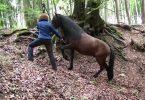 pferdeseite_tv_in_der_ruhe_liegt_die_kraft_am_berg5