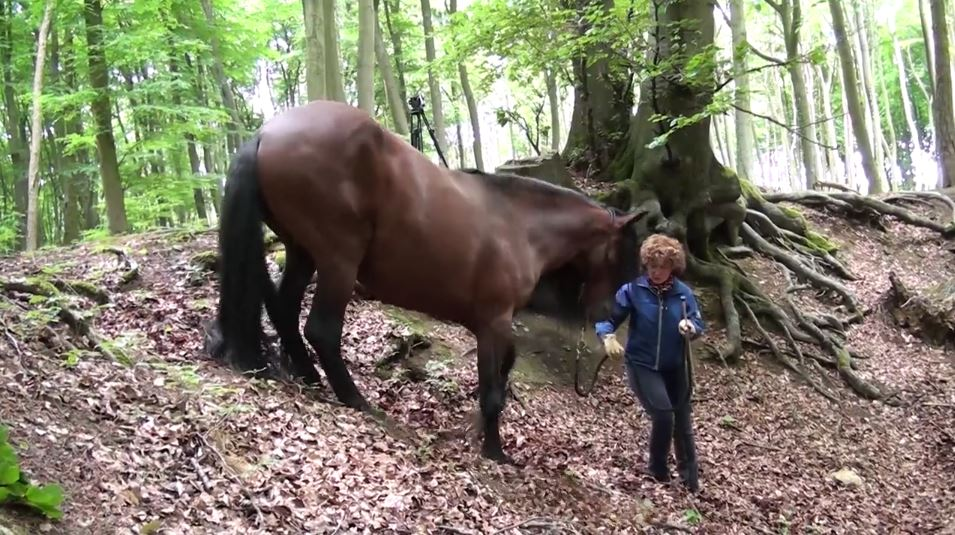 pferdeseite_tv_in_der_ruhe_liegt_die_kraft_am_berg6