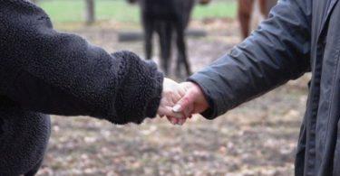 pferdeseite-tv-pferdekauf-per-handschlag