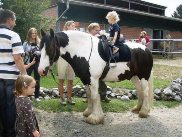 pferdeseite-tv-tinker-das-pferd-der-kesselflicker
