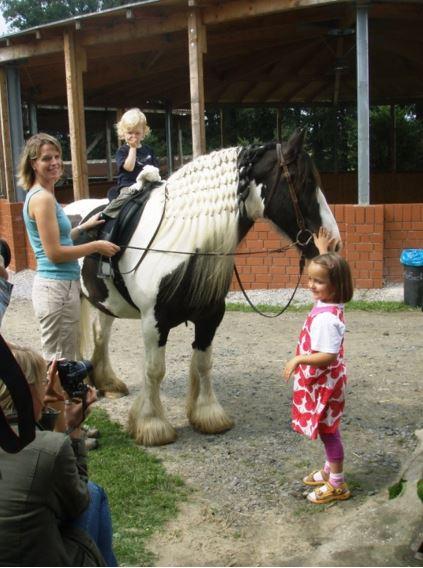 Tinker - bunt und genügsam sind die meisten Vertreter der irischen Kesselflicker-Pferde