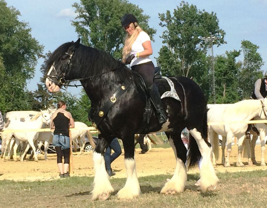 Nicht jedem Pferd passt die Kollektion von der Stange