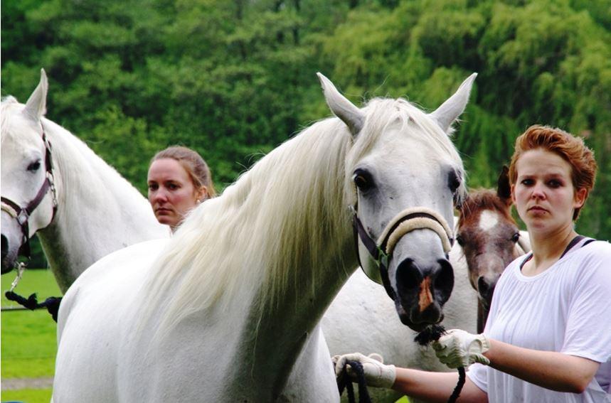 Trotz optischer Ähnlichkeiten zum Vorgänger – es ist ein anderes Pferd