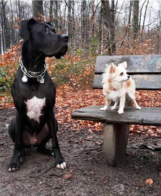 Kleine Hunde wissen nicht, dass sie klein sind