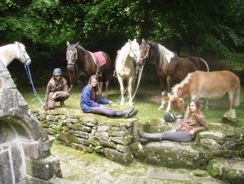 Ein großer Anteil der Pferdefreunde hat nur geringe Kenntnisse und noch weniger Interesse an der Arbeit der Landgestüte