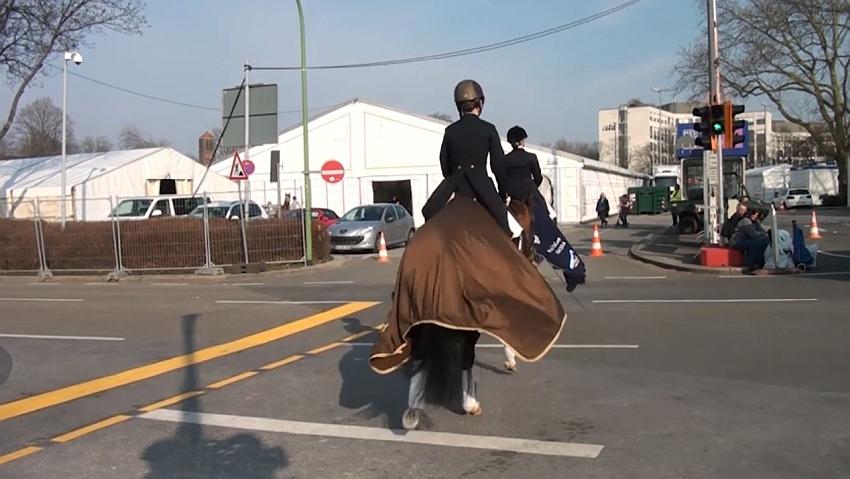 pferdeseite_tv_equitana_2017_pferdeampel_03