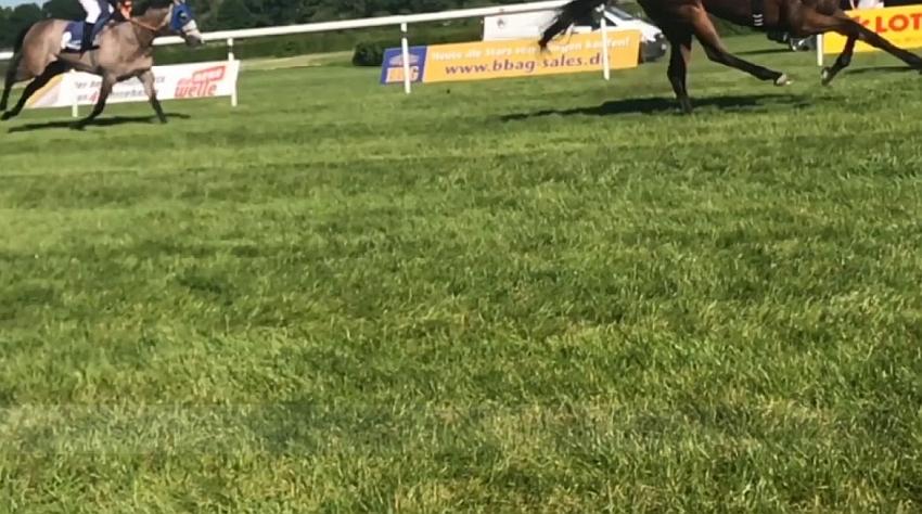 pferdeseite_tv_galopprennen_sind_aushaengeschilder_der_stadt_baden_baden_02