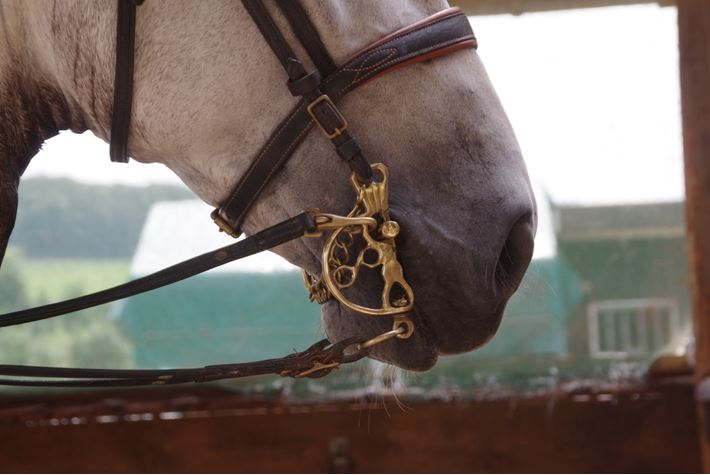 pferdeseite_tv_horsemanship_04