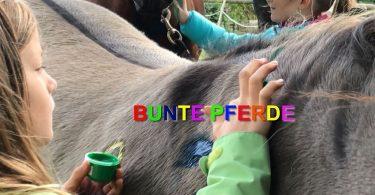pferdeseite_tv_bunte_pferde_01