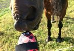 Die meisten Pferde genießen die Fellpflege