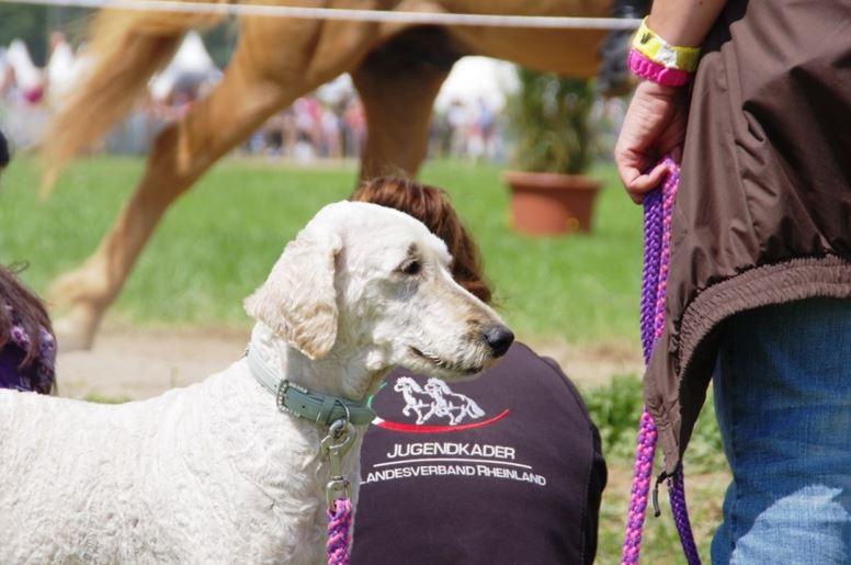 Ein Highlight für viele in Neuss: Horse & Dog Trail (H&D) der EWU Rheinland
